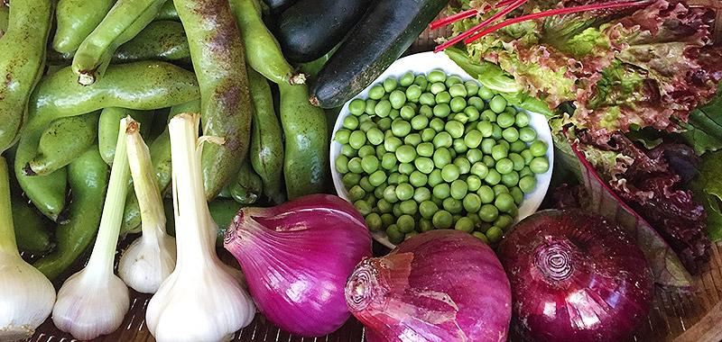コンポストオーガニック野菜